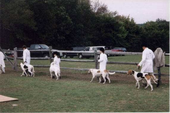 Second from left (white hound) Hannah Schaefer showing Lucyann and third from left